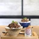 Shan Cha 山茶