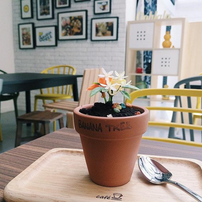 For Dainty Korean Desserts