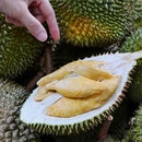 There are two more Thursdays left (18 Jul and 25 Jul) for you to indulge in the Durian Feast at Hotel Jen Orchardgateway as not only will you get the full spread of the dinner buffet, happening from 6:30pm to 10pm, there is a live station dedicated to opening fresh durians for diners.