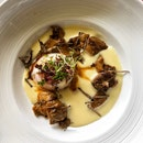👉Porcini Mushrooms Casserole With Confit Egg, Summer Truffle & Chicken Jus👈