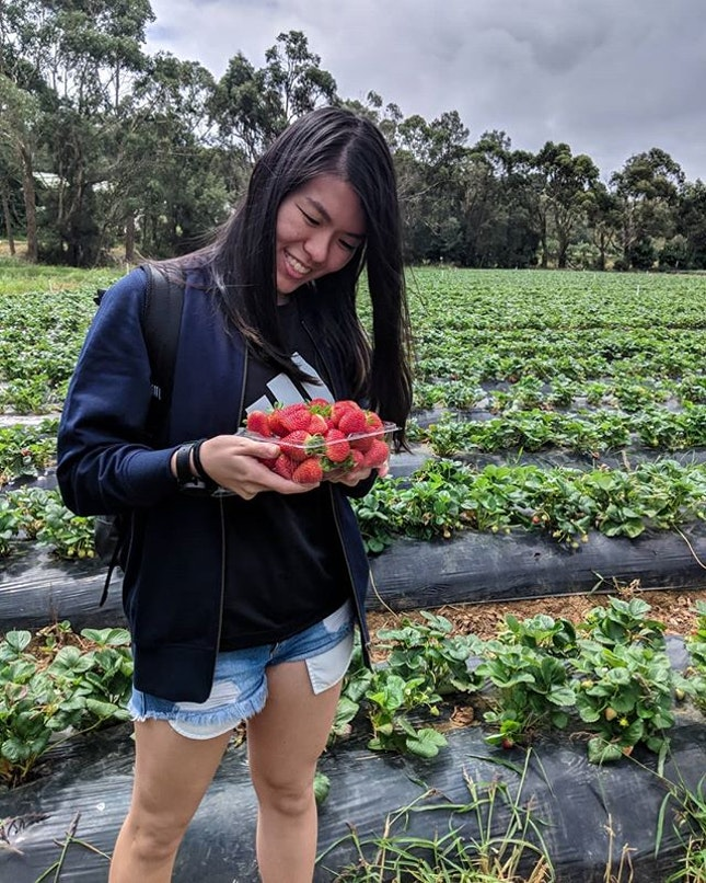 Had the most amazing fun plucking my own strawberries today at @sunnyridgestrawberryfarm - it's AUD 5 for children 12 and under & AUD 10 for anyone 13 and above!