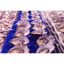 A dozen of freshly shucked Coffin Bay oysters, please!